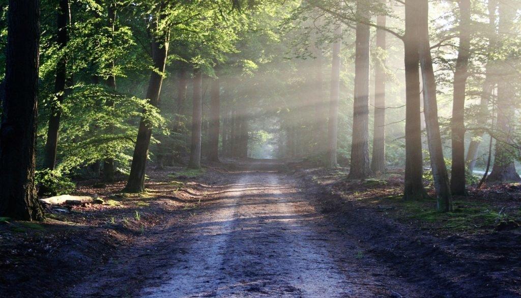 Investieren in Holz und Wald –  ist dies eine interessante Alternative für Dich ?