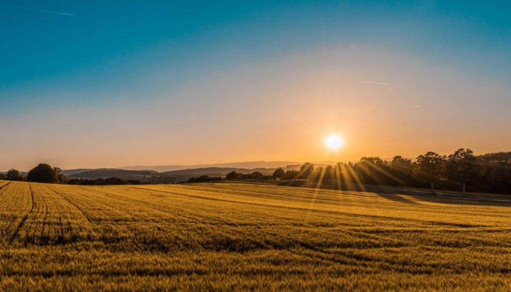 Passives Einkommen mit Ackerland erzielen
